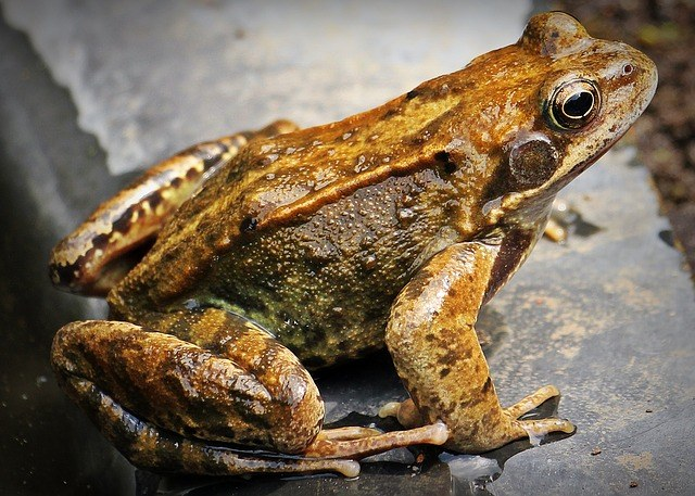 How to keep frogs away from house?