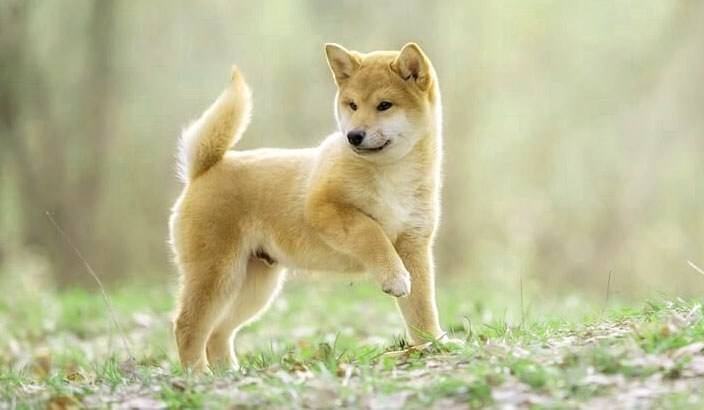 What are the popular Japanese names for dogs?